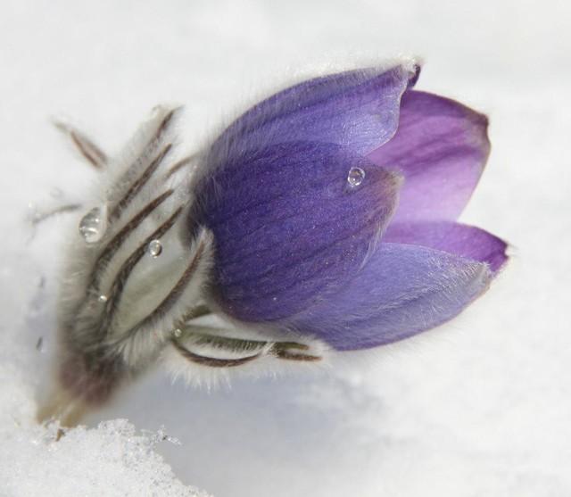 Цветок из интернов
